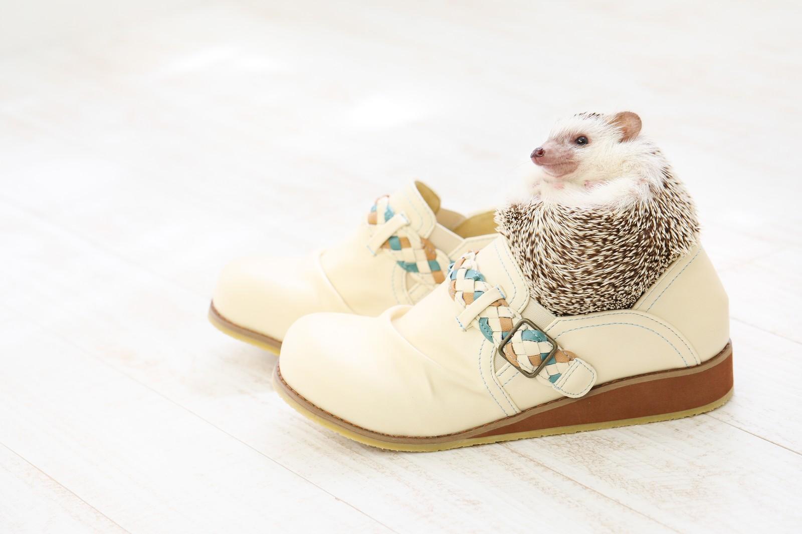 白い靴とハリネズミ