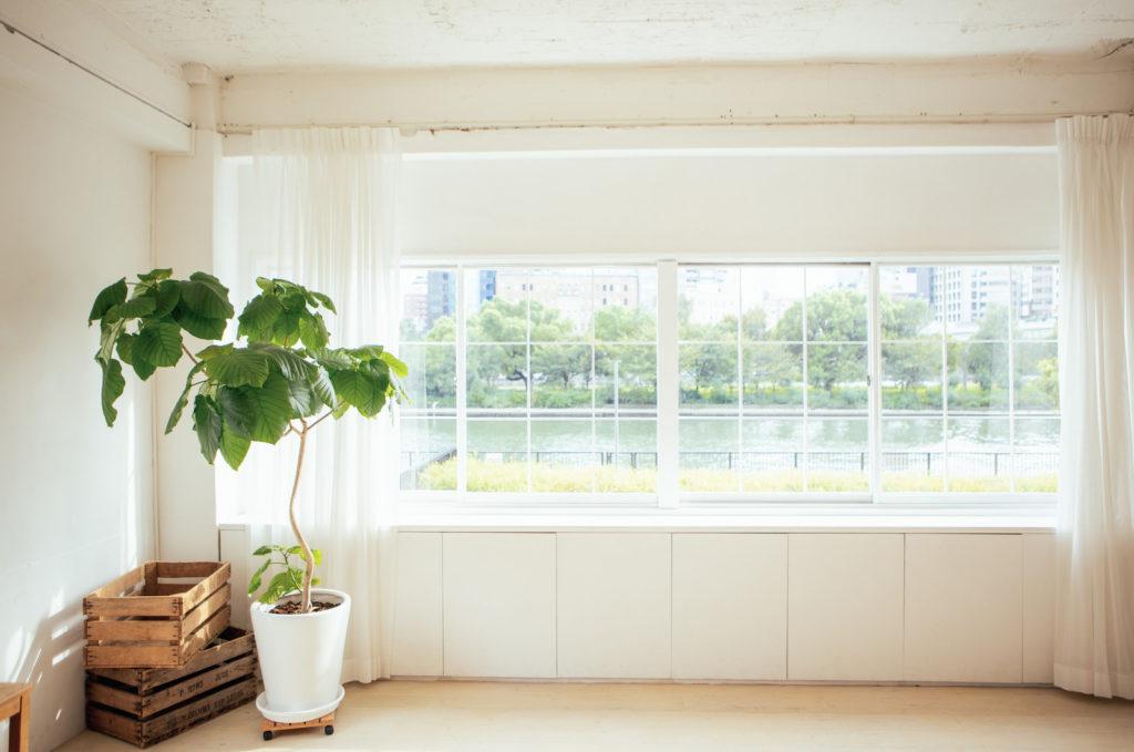 窓辺にグリーン