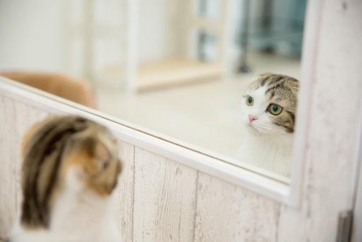 ミラーと猫